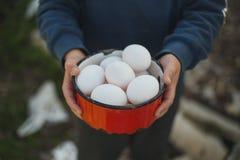 Ekologiska ägg i hand Arkivfoto