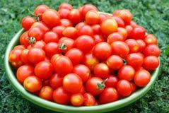 Ekologiska Cherrytomater i en handfat Arkivfoto