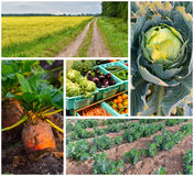 Ekologiska grönsaker för åkerbruk collage arkivfoto