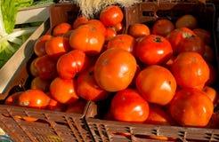 Ekologiska tomater Royaltyfri Bild