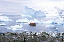 Ekologiska turister i uppblåsbart zodiakfartyg observerar Gentoo pingvin i paradishamnen, Antarktis arkivbild