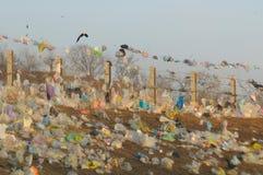 ekologiskt Royaltyfri Fotografi