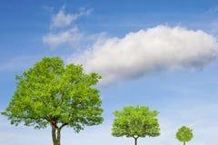 ekologiskt begrepp Träd och härlig himmel arkivbilder