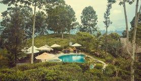 Ekologiskt hotell med simbassängen som omges av skogen och tekolonier Royaltyfri Foto