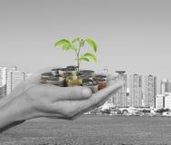 Ekologiskt investeringbegrepp royaltyfri bild