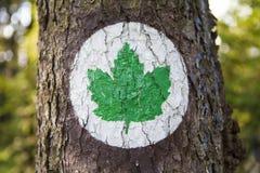 Ekologisymbol - grönt bladtecken Fotografering för Bildbyråer