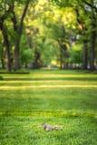 Ekorre i Central Park Royaltyfria Foton