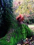 ekorre i härlig trädgård Arkivbilder