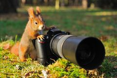 Ekorre med den stora yrkesmässiga kameran Arkivfoto