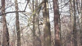 Ekorre- och vårskog stock video