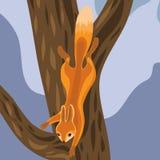 Ekorre på träd Vektor Illustrationer