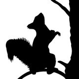 Ekorre på trädet. Fotografering för Bildbyråer