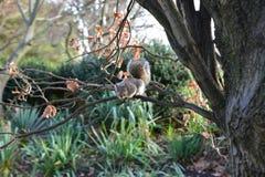Ekorre på tree arkivfoton