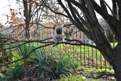 Ekorre på tree arkivfoto