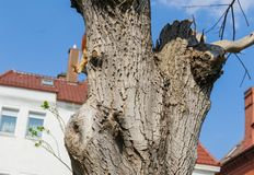 Ekorre p? en Tree arkivbilder