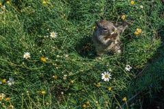 Ekorre som äter blommor i grön vegetation royaltyfria bilder