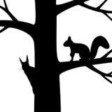 Ekorre två på trädet. Arkivbild