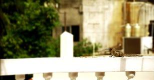 Ekorren äter, gömma sig väntan på en vägg av ett hus som omkring ser Arkivbild
