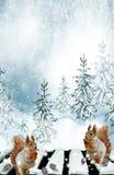 Ekorren i vinterträna Fotografering för Bildbyråer