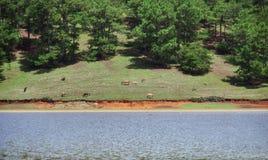 Ekosystem, środowisko, zielona łąka obok jeziora z niebieskim niebem i chmury część 7 i, zdjęcie stock