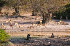 ekosystem Royaltyfri Foto