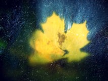 Ekranowy skutek Kolorowy łamający liść od klonowego drzewa na bazaltów kamieniach w zamazanej wodzie halna rzeka Piękno sceneria  Zdjęcia Royalty Free