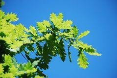 Eksidor mot bakgrunden av den blåa himlen Sommarlandskap av den lösa naturen av flora arkivfoto