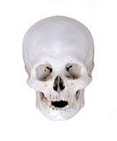 ekskawacj istoty ludzkiej odosobniony czaszki biel Fotografia Stock
