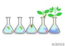 Eksperymentalny przyrost rośliny w Erlenmayer kolbie, roślina, natura, środowisko obraz royalty free