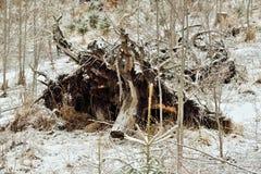 Eksploatacja lasy fotografia royalty free