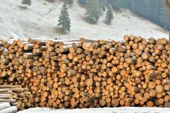 Eksploatacja lasy zdjęcia royalty free