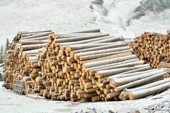 Eksploatacja lasy zdjęcie royalty free