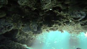 Eksploracja Podwodna w San Andres Kolumbia zbiory wideo