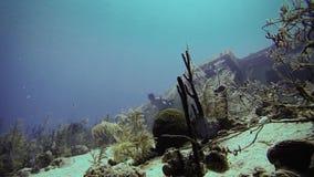 Eksploracja Podwodna w San Andres Kolumbia zdjęcie wideo