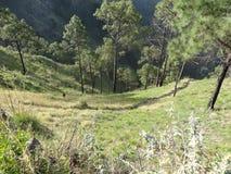 Eksploracja w Himachal 3-Kasauli Zdjęcie Royalty Free