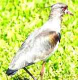 Ekspozycja zero ptak zdjęcia stock