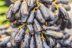 Ekstra olbrzymi rozmiar czarna beznasienna księżyc Opuszcza winogrona lub czarownicy żebro Fotografia Royalty Free