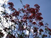 Ekstrawagancki drzewo przeciw niebieskiemu niebu Obraz Stock