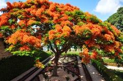 Ekstrawagancki drzewo w Haifa Izrael obrazy royalty free