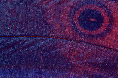 ekstremalne makro skrzydła motyla obrazy stock