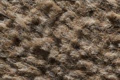 Ekstremum zamknięty dywan up zdjęcie royalty free