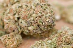 Ekstremum zamknięty suchy marihuana pączek up obraz royalty free