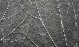 Ekstremum zamknięty up obrazek starzy ściśnięci liście obrazy stock