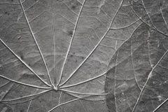 Ekstremum zamknięty up obrazek starzy ściśnięci liście zdjęcia stock