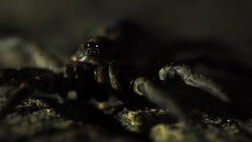 Ekstremum zamknięty w górę spokojnego pająka z odmieniania oświetleniem zdjęcie wideo