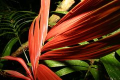 Ekwador. Green and red leaves in tropics Stock Photography