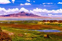 El撒拉族de塔拉或塔拉盐舱内甲板位于高原,在高度超过4000米在阿塔卡马沙漠,智利 免版税库存图片