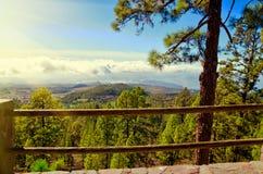 El泰德峰国家公园美丽的景色  杉木森林、夏天或者春天风景 免版税图库摄影