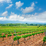 El的利昂Bierzo葡萄园由圣詹姆斯方式的 免版税库存照片