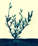 el马德里槽牙晚上橄榄色场面结构树 库存照片